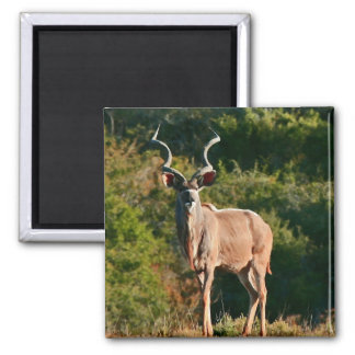 East Cape Kudu magnet