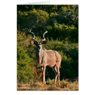 East Cape Kudu note card
