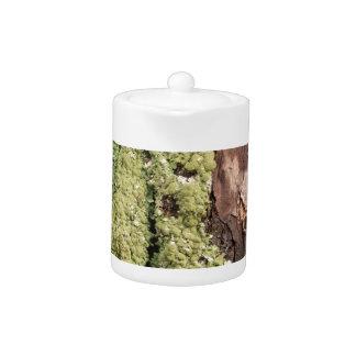 East Coast Pine Tree Bark Wet From Rain with Moss