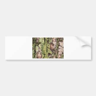East Coast Pine Tree Bark Wet From Rain with Moss Bumper Sticker