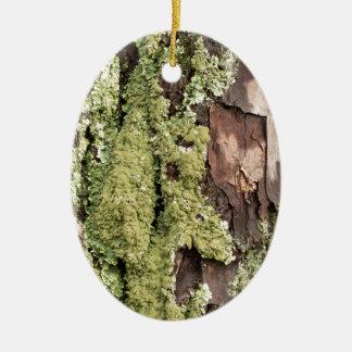 East Coast Pine Tree Bark Wet From Rain with Moss Ceramic Oval Decoration