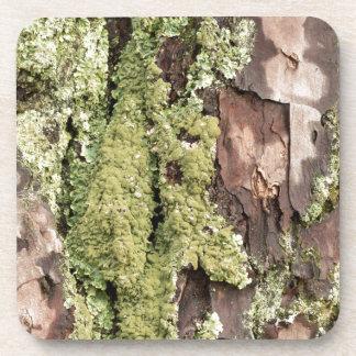 East Coast Pine Tree Bark Wet From Rain with Moss Coaster