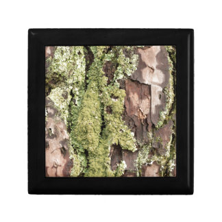 East Coast Pine Tree Bark Wet From Rain with Moss Gift Box