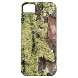 East Coast Pine Tree Bark Wet From Rain with Moss iPhone 5 Cases
