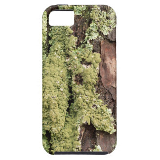 East Coast Pine Tree Bark Wet From Rain with Moss iPhone 5 Cover