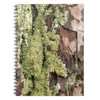 East Coast Pine Tree Bark Wet From Rain with Moss Notebook