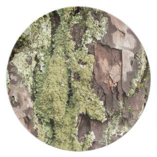 East Coast Pine Tree Bark Wet From Rain with Moss Plate
