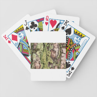 East Coast Pine Tree Bark Wet From Rain with Moss Poker Deck