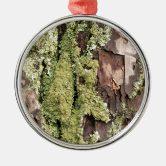 East Coast Pine Tree Bark Wet From Rain with Moss Silver-Colored Round Decoration