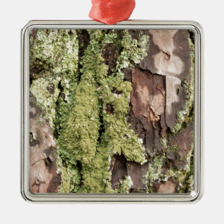East Coast Pine Tree Bark Wet From Rain with Moss Silver-Colored Square Decoration