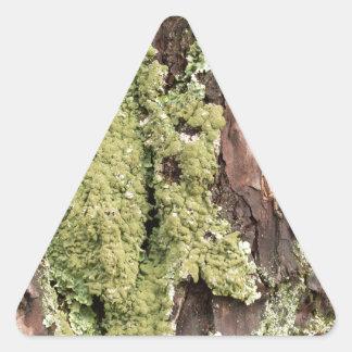 East Coast Pine Tree Bark Wet From Rain with Moss Triangle Sticker
