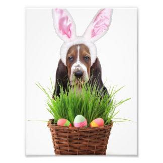 Easter Basset Hound dog Art Photo