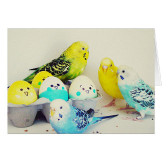 Easter Budgies Card