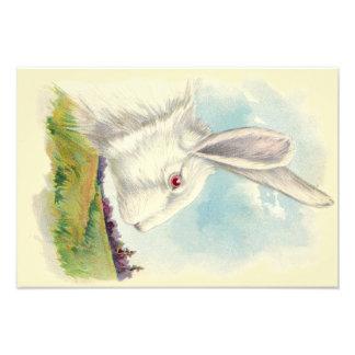Easter Bunny White Albino Field Photo