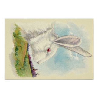 Easter Bunny White Albino Field Poster
