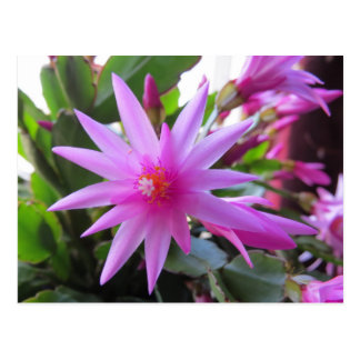 Easter Cactus Flowers Post Card