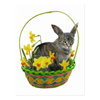 Easter Cat in Daffodils Postcard
