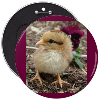Easter Chick-A-Dee-Light Pinback Buttons
