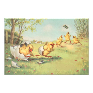 Easter Chick Butterfly Farmyard Photo Print