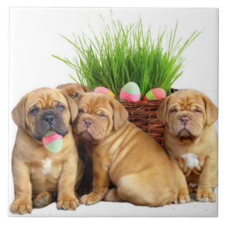 Easter Dogue de Bordeaux pups Large Square Tile