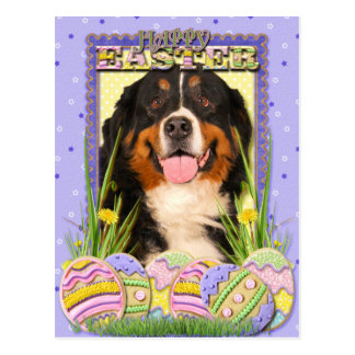 Easter Egg Cookies - Bernese Mountain Dog Postcard