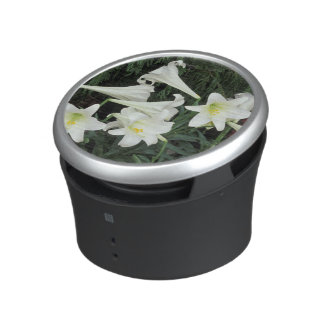 Easter Lily (Lilium regale) Speaker