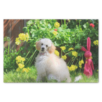 Easter poodle puppy tissue paper