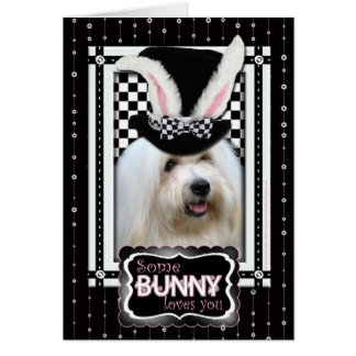 Easter - Some Bunny Loves YouCoton deTulear Card