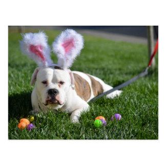 Easter Valley Bulldog Postcard