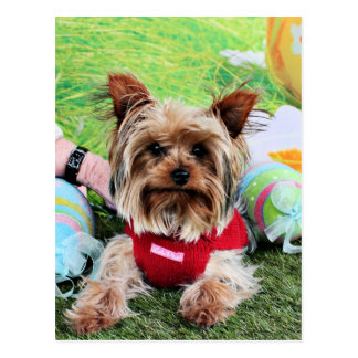 Easter - Yorkshire Terrier - Sassy Postcard