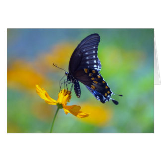 Eastern Black Swallowtail Card