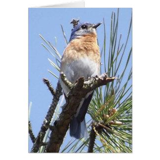 Eastern Bluebird Greeting Card