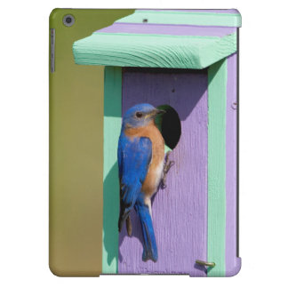 Eastern Bluebird iPad Air Cases