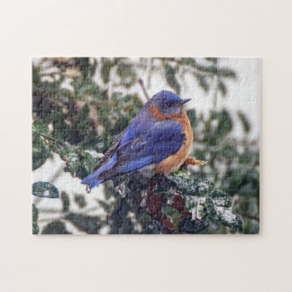 Eastern Bluebird on Ice Covered Holly Puzzle