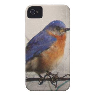 Eastern Bluebird Photo iPhone 4 Case