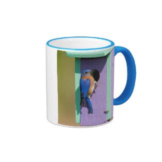 Eastern Bluebird Ringer Mug