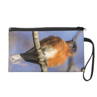 Eastern Bluebird Wristlet Clutches