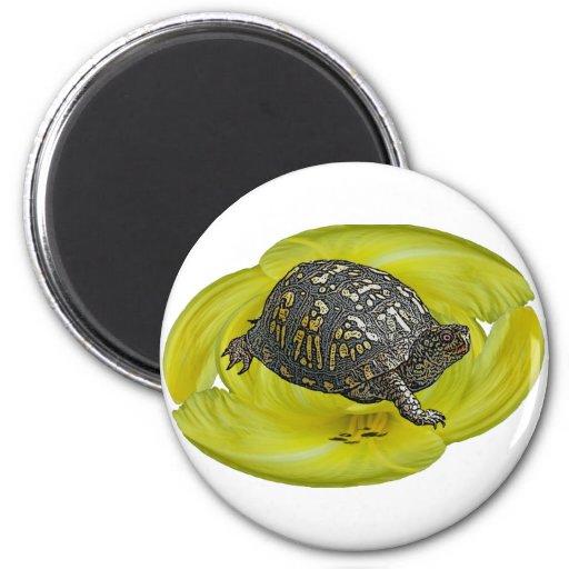 Eastern Box Turtle Coordinating Items Fridge Magnet