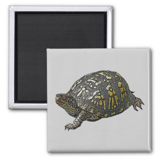 Eastern Box Turtle Coordinating Items Square Magnet