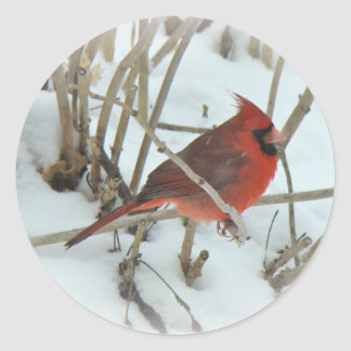 Eastern Cardinal Songbird Coordinating Items Round Sticker