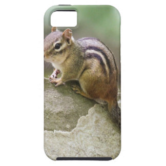 Eastern Chipmunk iPhone 5 Case
