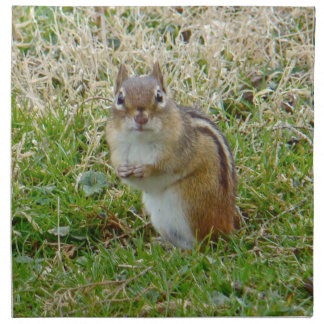 Eastern Chipmunk Printed Napkin