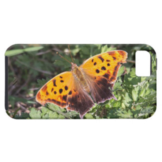 Eastern Comma Case For The iPhone 5
