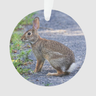 Eastern Cottontail Ornament