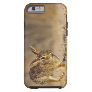 Eastern cottontail rabbit hopping tough iPhone 6 case