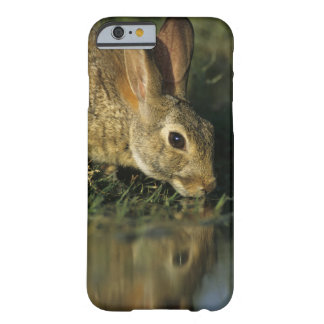Eastern Cottontail, Sylvilagus floridanus, 2 Barely There iPhone 6 Case