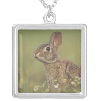 Eastern Cottontail, Sylvilagus floridanus, 3 Square Pendant Necklace