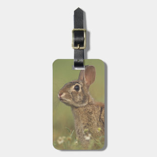Eastern Cottontail, Sylvilagus floridanus, 3 Tag For Luggage