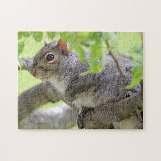 Eastern Gray Squirrel Jigsaw Puzzle