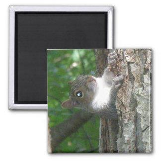 Eastern Grey Squirrel (Sciurus carolinensis) Items Square Magnet